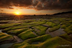 Mossy Rocks, Clare Coast, Ireland.
