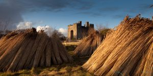 Bunratty Reeds (p)