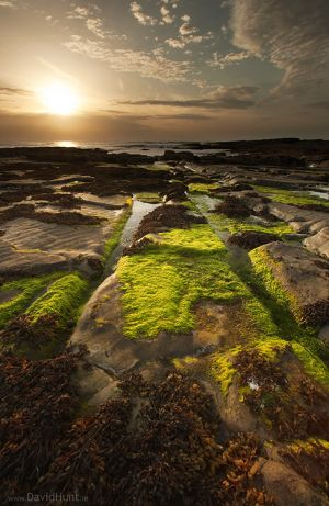 Mossy Coast